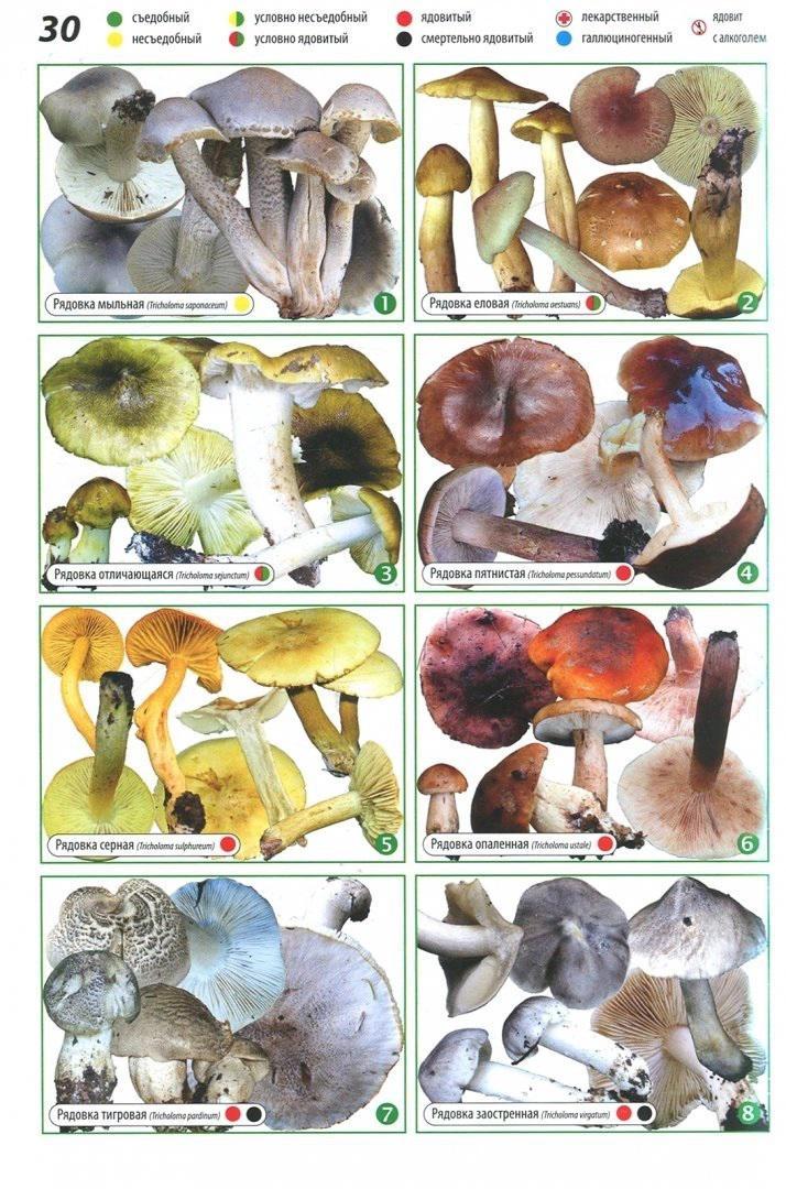 Всё о грибах. Популярная энциклопедия