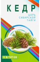 Кедр - царь сибирской тайги
