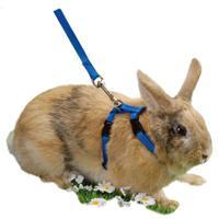 """Шлейка с поводком для кроликов """"Beeztees"""", нейлоновая"""