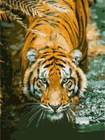 """Раскраска по номерам на картоне """"Тигр"""", формат А3"""